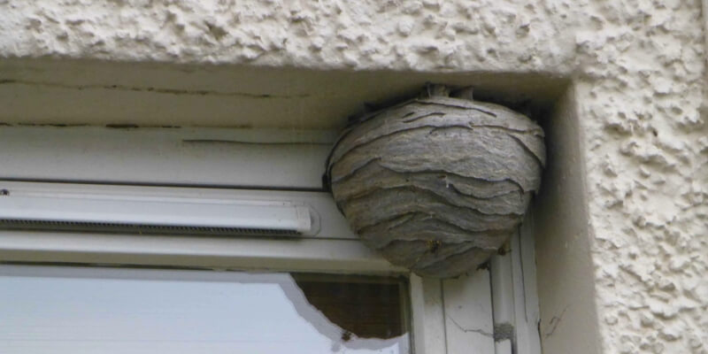 How can you live peacefully with wasps