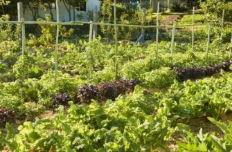 Permaculture homestad