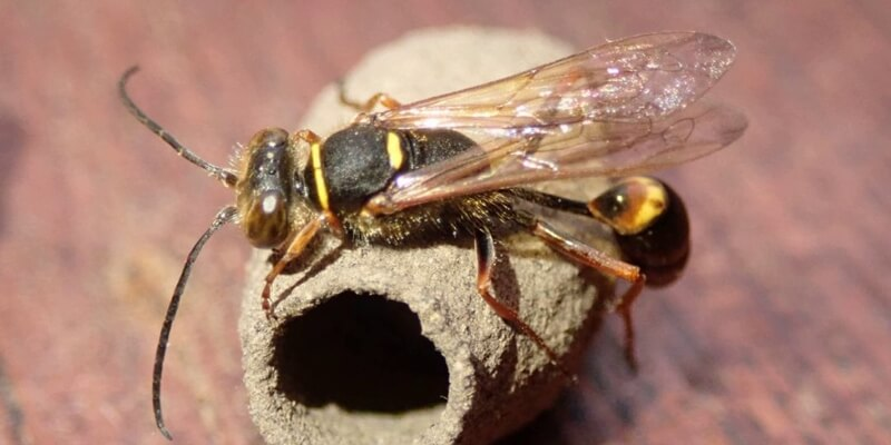 Relocate Wasp Nests
