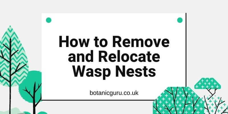 Remove Wasp Nests
