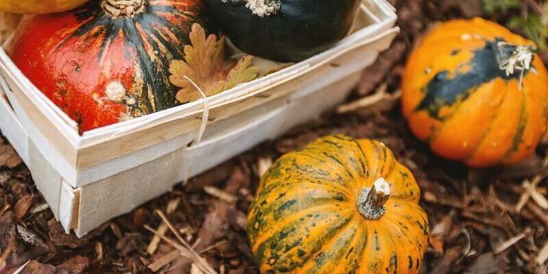 Fall-Garden-Treatment