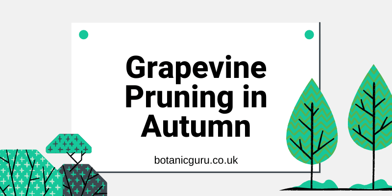 Grapevine-Pruning-in-Autumn