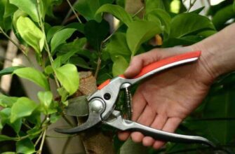Pruning-Techniques-for-Fruit-Trees