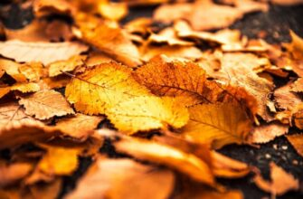 Use-Leaves-in-the-Fall